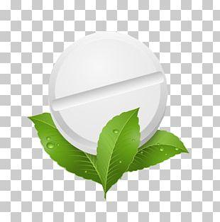 Peppermint Herb Leaf Illustration PNG