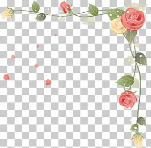 Rose Flower Stock Photography PNG