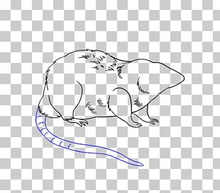 Laboratory Rat Drawing Mouse Sketch PNG