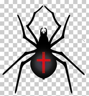 Spider Halloween Film Series PNG