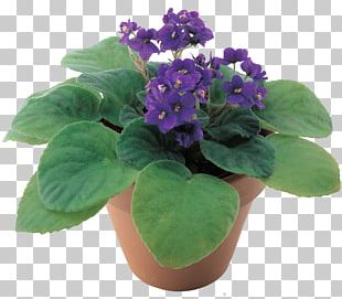Violet Flowerpot Chinese Wisteria Penjing Ornamental Plant PNG