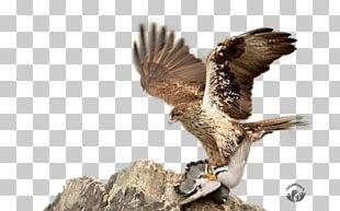 Hawk Eagle Faroz Pide & Akcaabat Kofte Salonu Buzzard Falcon PNG