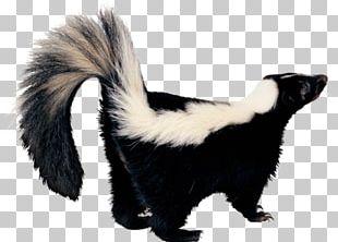 Skunk Desktop PNG