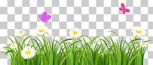 Butterfly Flower Lawn PNG