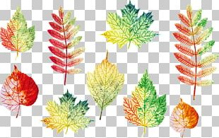 Autumn Leaves Leaf Euclidean PNG