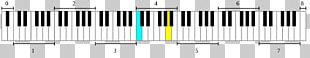Musical Keyboard Octave Piano Frequency PNG
