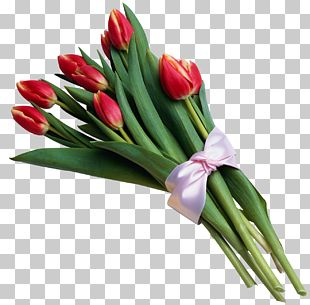 Tulip Flower Bouquet PNG