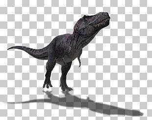 Tyrannosaurus Spinosaurus Dinosaur Size Barosaurus PNG