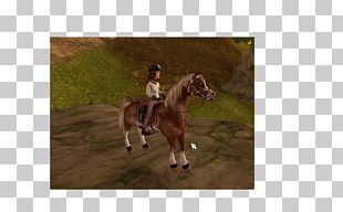 Stallion Mustang Bridle Mare Western Riding PNG