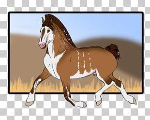 Foal Stallion Mustang Colt Mare PNG
