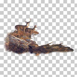 Roe Deer Moose Reindeer Forest PNG