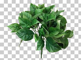 Green JMC Floral Bush Basil Devil's Ivy PNG