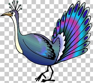 Bird Asiatic Peafowl Animation PNG
