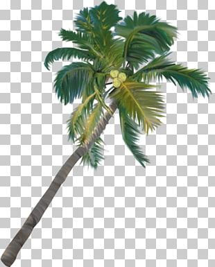 Arecaceae Plant Tree Asian Palmyra Palm Date Palm PNG