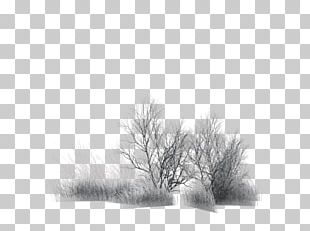 Branch Tree Painting Black PNG