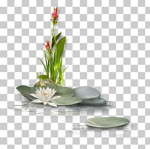 Nelumbo Nucifera Flower PNG