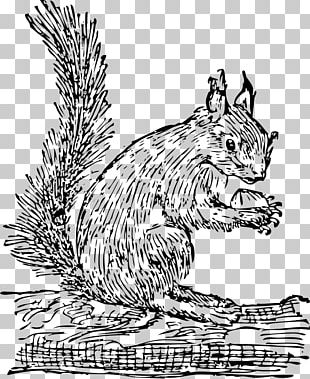 Eastern Gray Squirrel Red Squirrel PNG