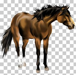 American Paint Horse Mustang American Quarter Horse Mane Pony PNG