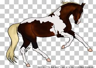 Foal Stallion Mustang Mare Colt PNG
