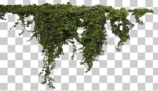 Plants Header PNG