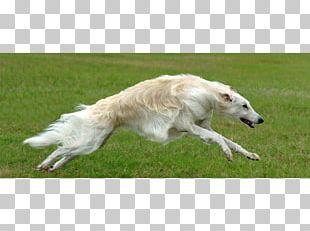 Borzoi Saluki Silken Windhound Whippet Polish Greyhound PNG