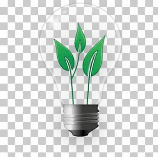 Incandescent Light Bulb Lighting Electric Light Light Fixture PNG