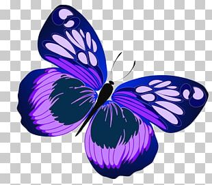 Butterfly Purple Free Content PNG