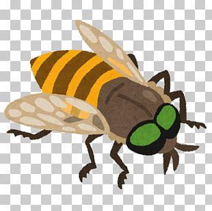 Honey Bee アブ Fly 虫 PNG