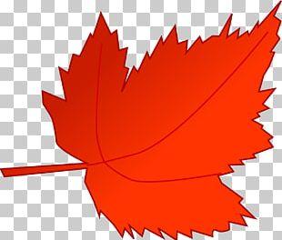 Autumn Leaf Color Autumn Leaf Color Red PNG