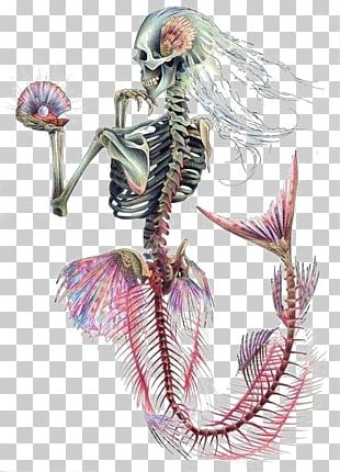 Ariel Mermaid Human Skeleton Skull PNG