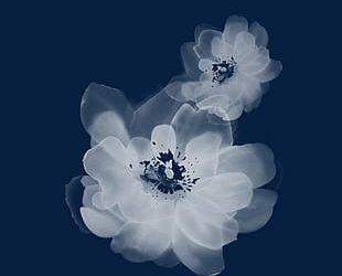 Transparent Flower Decoration PNG