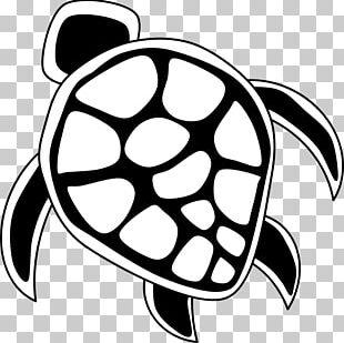 Hawaii Sea Turtle PNG