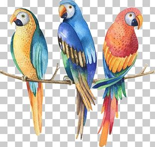 Parrot Watercolor Painting Stock Photography PNG