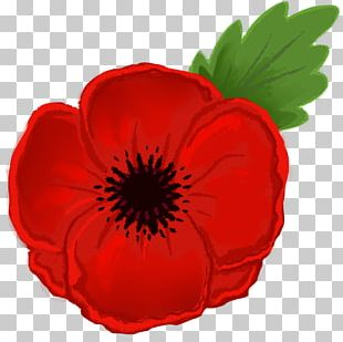 Remembrance Poppy Drawing Flower PNG