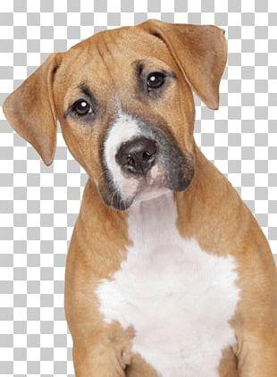 Sad Dog PNG