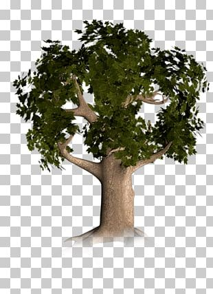 Trunk Branch Tree PNG