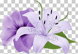 Flower Purple Lavender PNG
