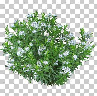 Shrub Plant Tree PNG
