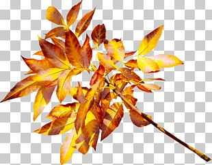 Leaf Yellow Gold PNG