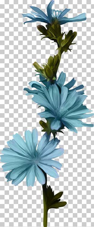 Cut Flowers Plant Stem Chicory Petal PNG