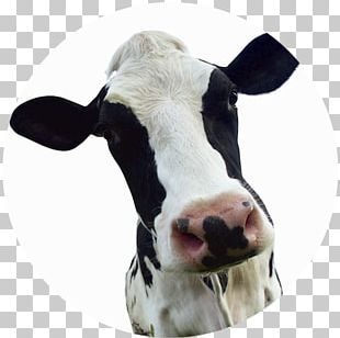 Dairy Cattle Calf Milk Dairy Farming Dairy Products PNG