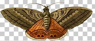 Butterfly Acherontia Styx Moth PNG