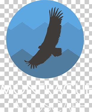 Monfragüe Bald Eagle National Park European Bee-eater PNG