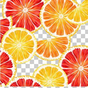 Lemon Grapefruit Orange PNG