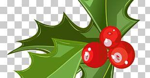Mistletoe Candy Cane Christmas Phoradendron Tomentosum PNG