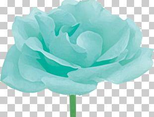 Garden Roses Cabbage Rose Petal Flower Pink PNG