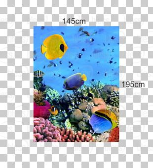 Coral Reef Photograph Underwater PNG