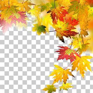 Autumn Leaf Computer File PNG