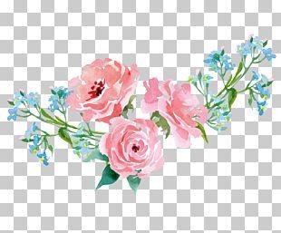 Garden Roses Pink Illustration PNG