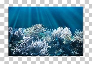 Jellyfish Coral Reef Underwater Red Sea PNG